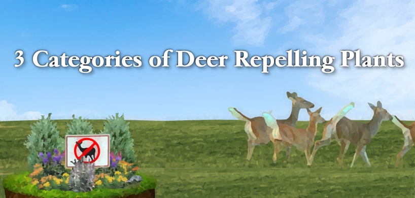 "Deer running away from d""deer repelling"" plants, and the title ""3 Categories of Deer Repelling Plants""."
