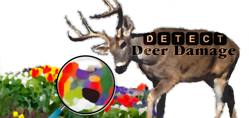 "Deer eating from a flower bed under a magnifying glass with the text ""Detect Deer Damage"""