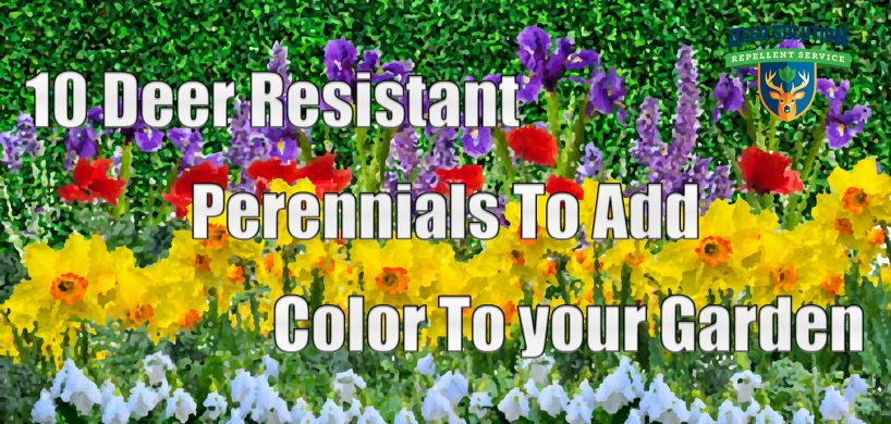 "A garden made of deer resistant perennials in the style of an oil painting with the title, ""10 Deer Resistant Perennials To Add Color To Your Garden"""