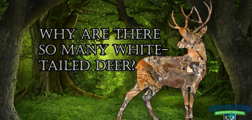 "A Buck made of many deer in the forest with the title, ""Why are there so many white-tailed deer?"""