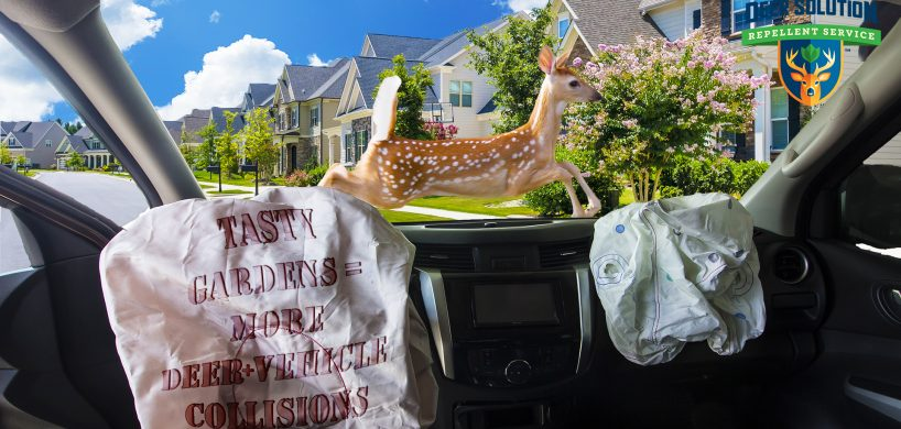 "Car with airbags deployed and a deer jumping infront of it with the text, ""Tasty Gardens = More Deer + Vehicle Collisions"